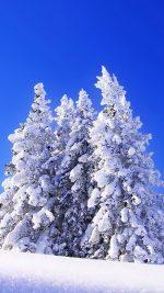 Great Blue Sky in Winter