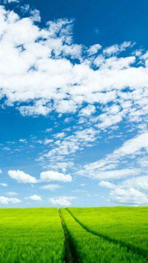 Landscape Grass And Sky