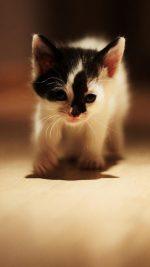 Cute   222