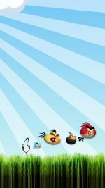 Angry Birds 3D Grass