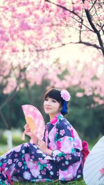 Sakura Season Japanese Girl Japan