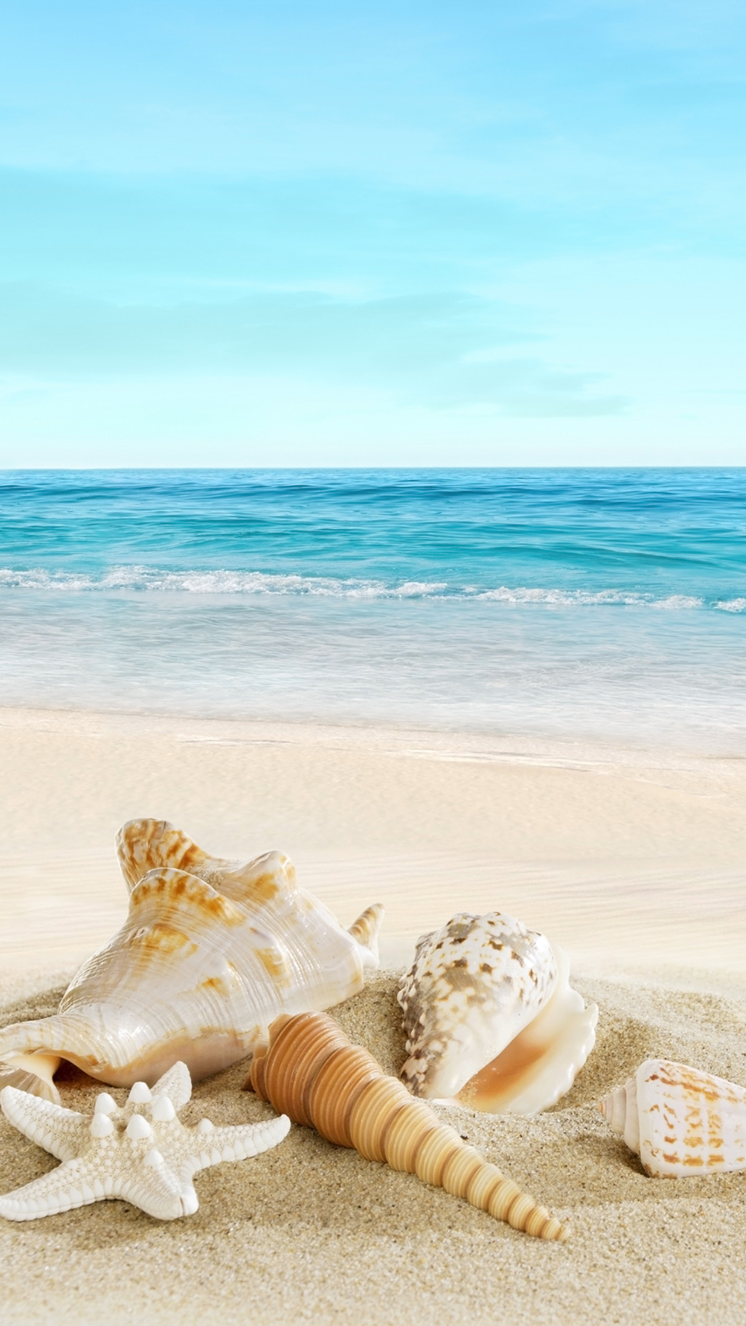 Landscape with shells on tropical beach