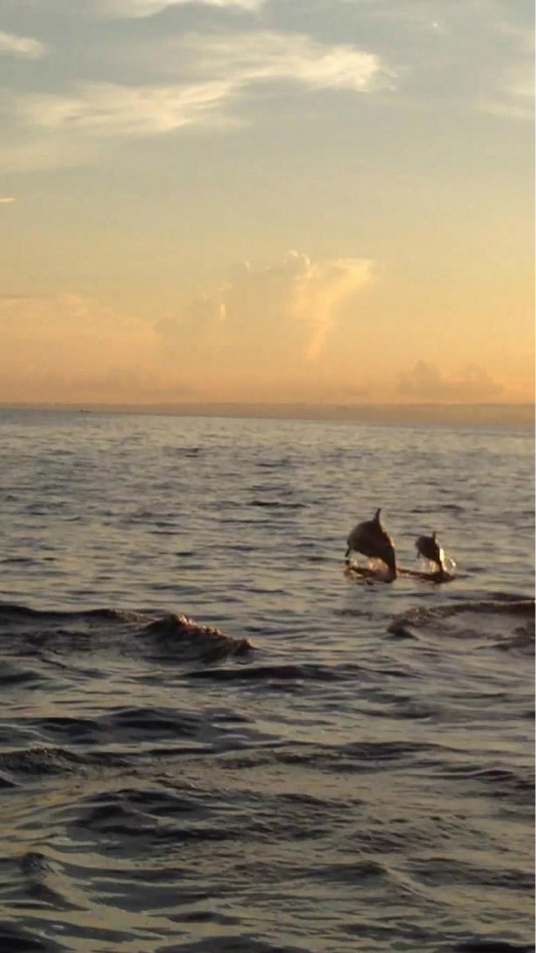 Dolphins Beach
