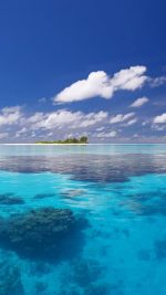 Tropical Beach and Coral
