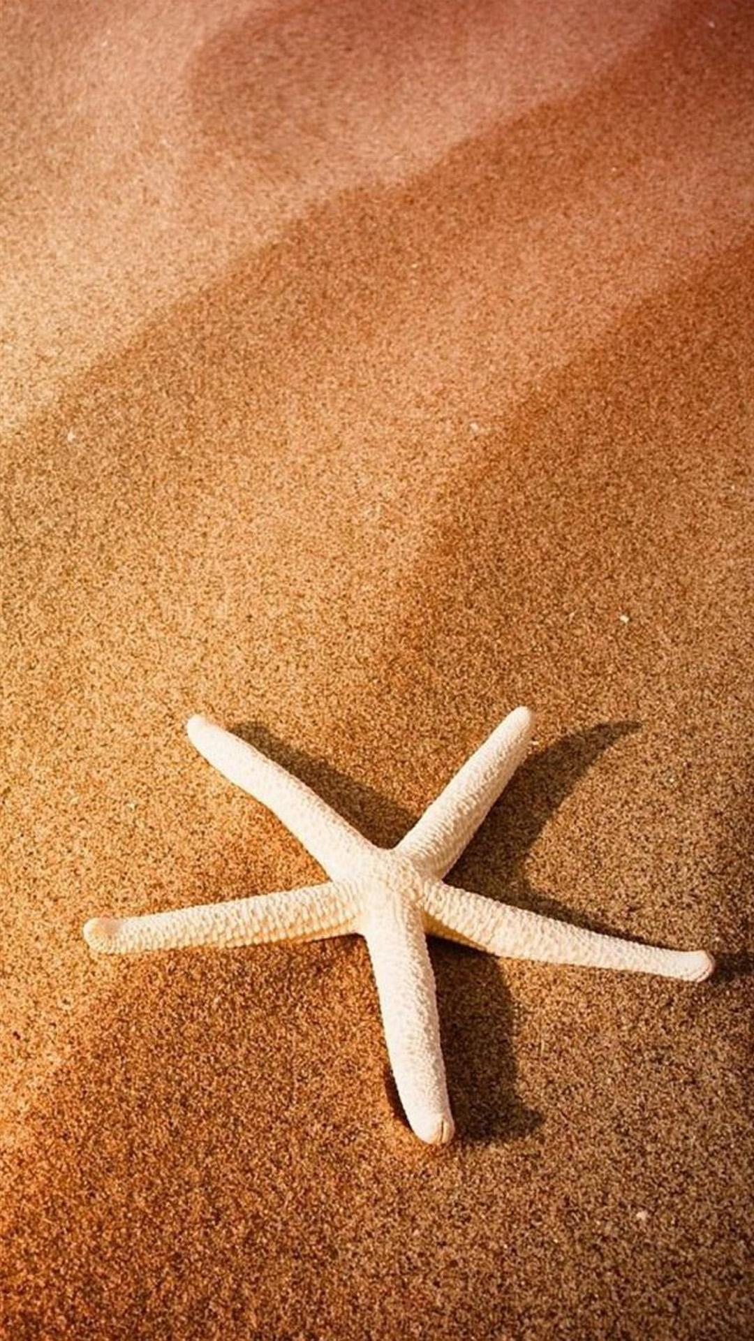 Beach Seastar