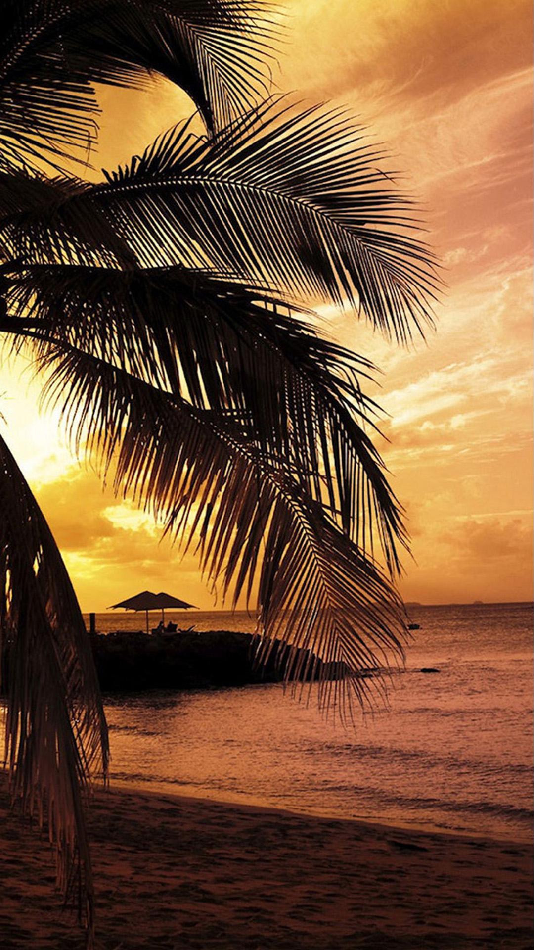 Beach Palm Trees