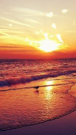 Beach   96