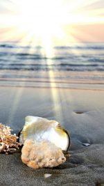 Dawn beach shells