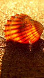 Golden Beach Shell