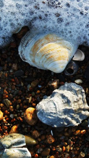 Shell sand HD