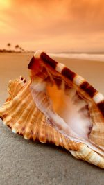 Sunset Beach Shell