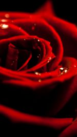 3D Rose Valentine
