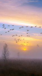 Autumn Dusk Geese