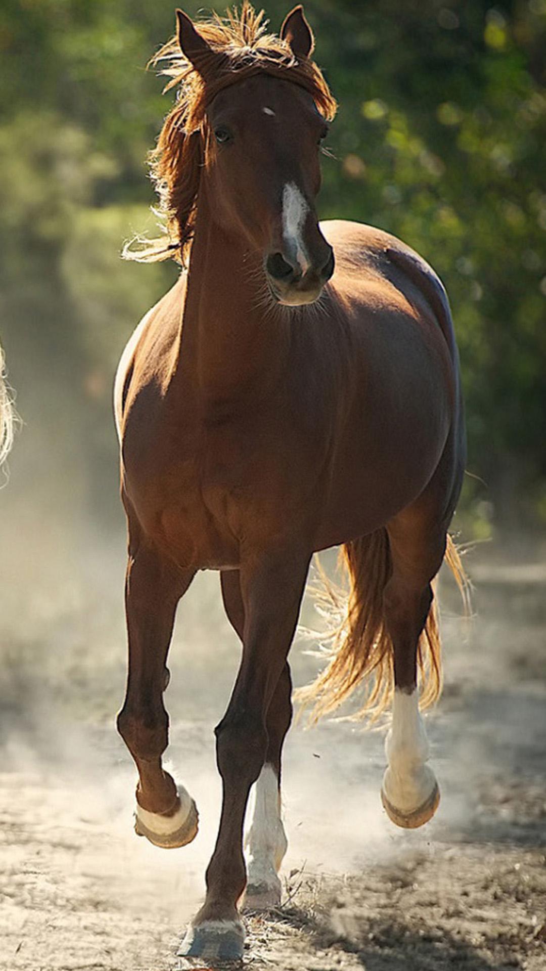 Brown Horse IPhone Wallpaper
