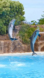 Dolphins Wonderful Moments