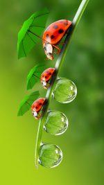 HD Interesting Beetle