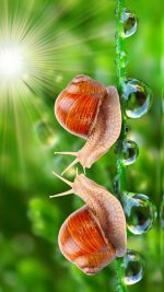 HD Loving Snail