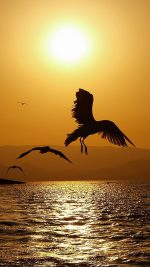 Perfect Sunset Seagull