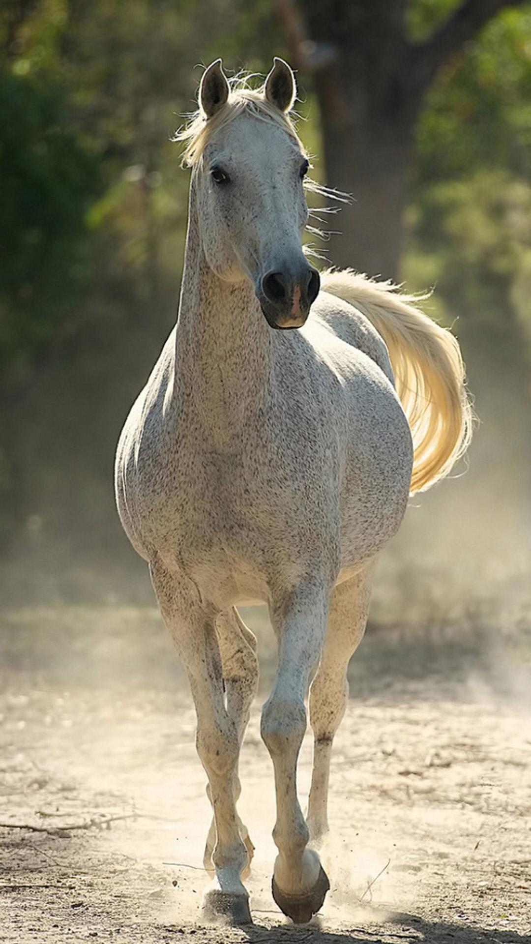 IPhone 8 Running Horse