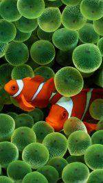 Seaweed Fish