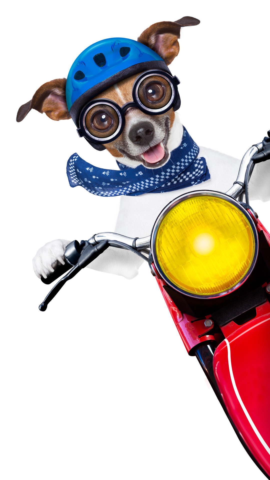 motorbike dog beside a blank white banner