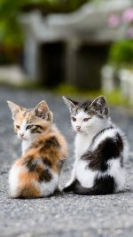 Two Very Cute Cats