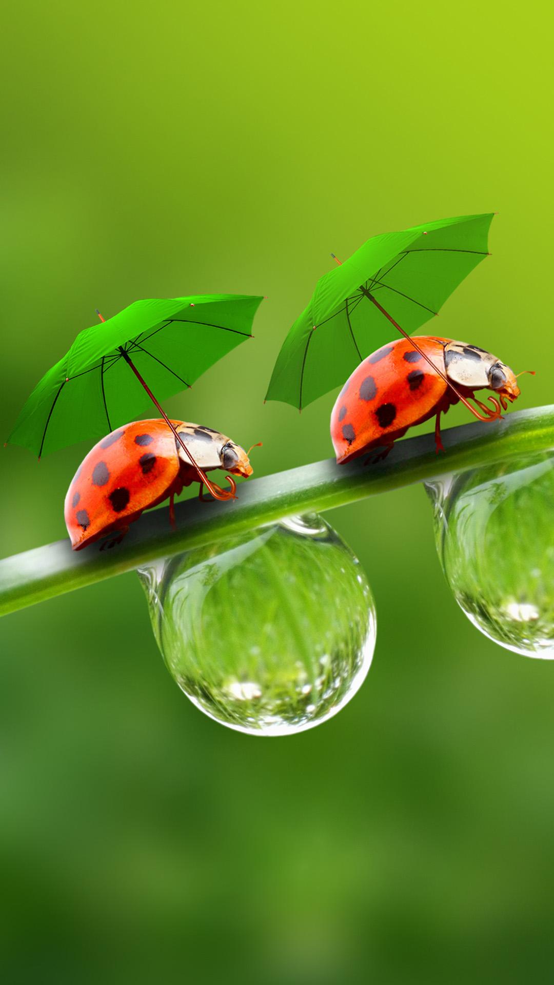 Umbrella Beetle