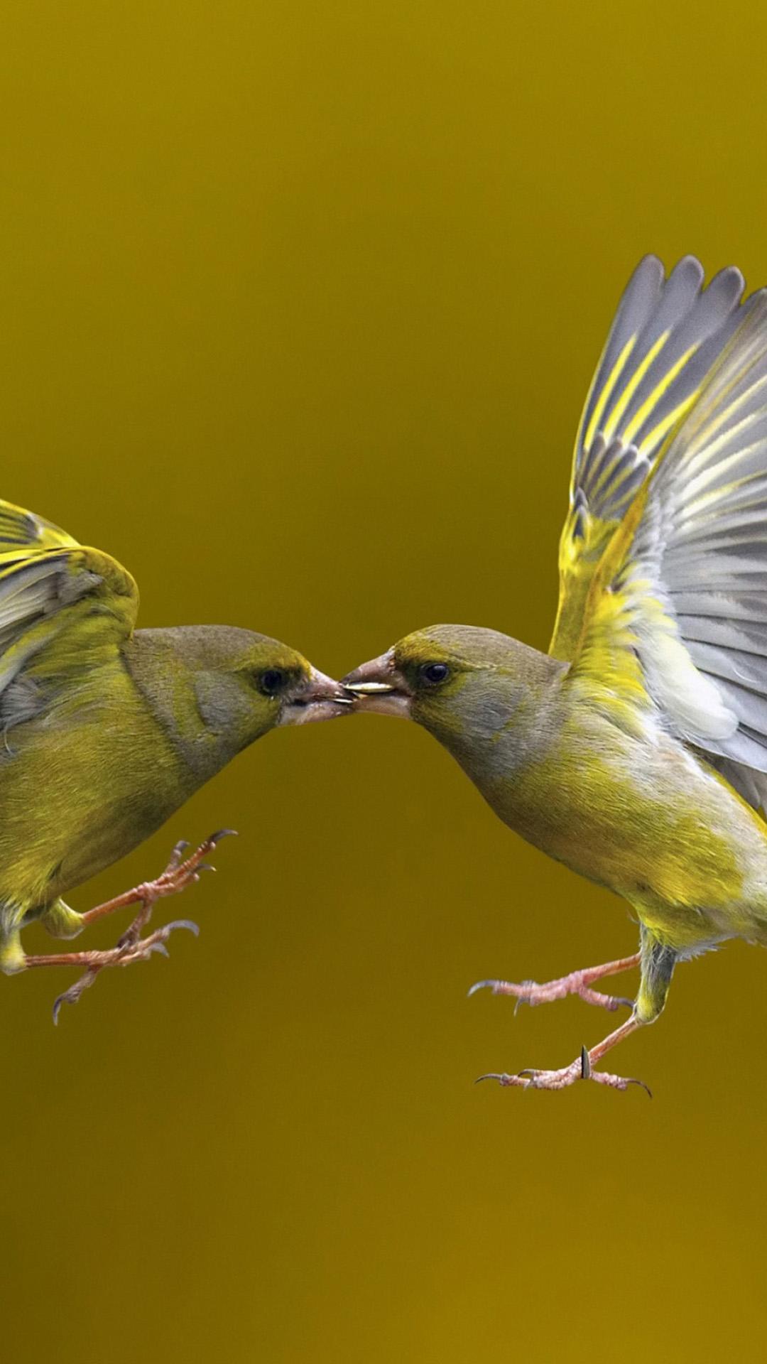 Very Interesting Birds