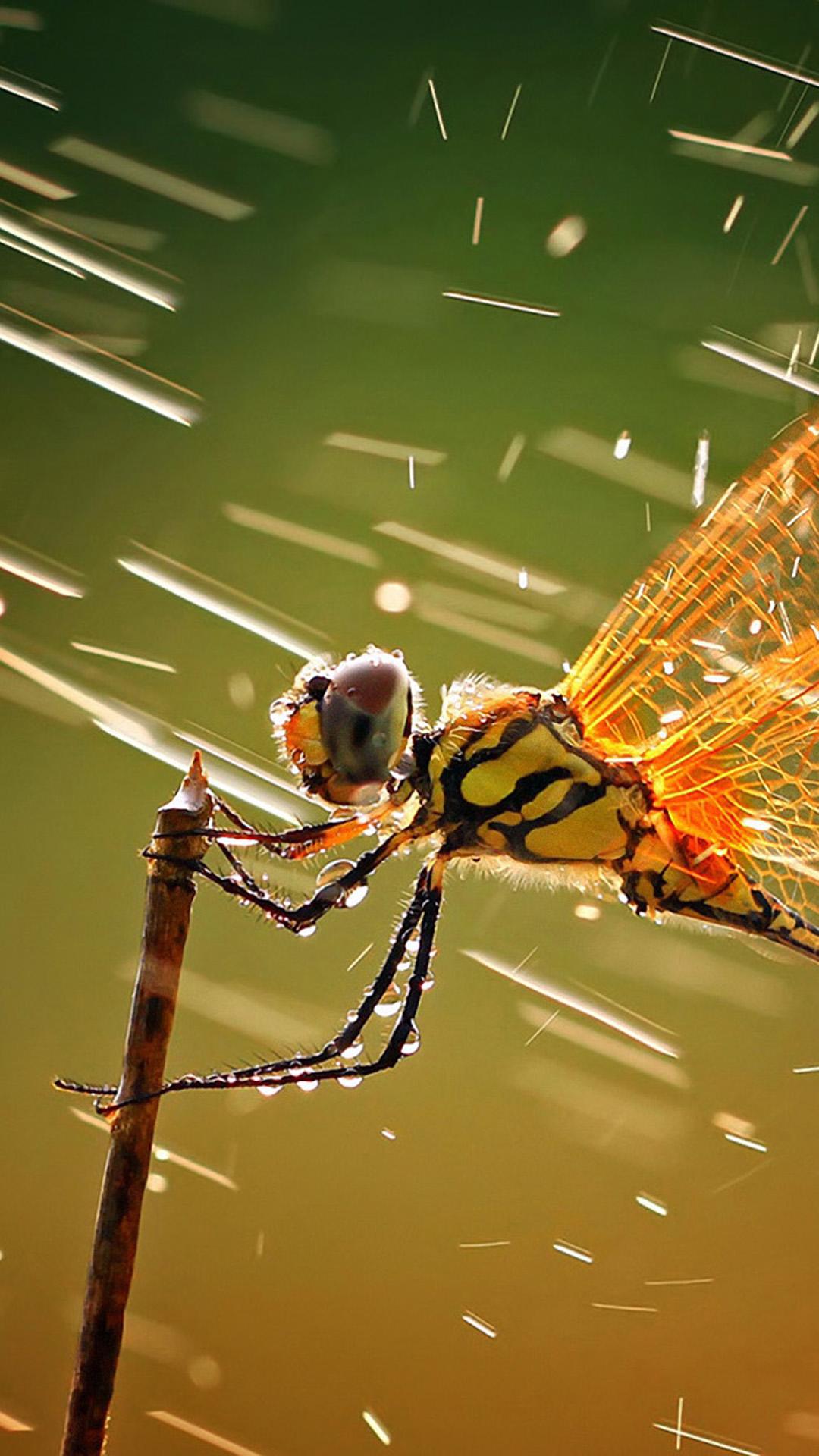 Wind Dragonfly