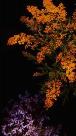 Apple Orange Flower Dark Ios9 Iphone6s