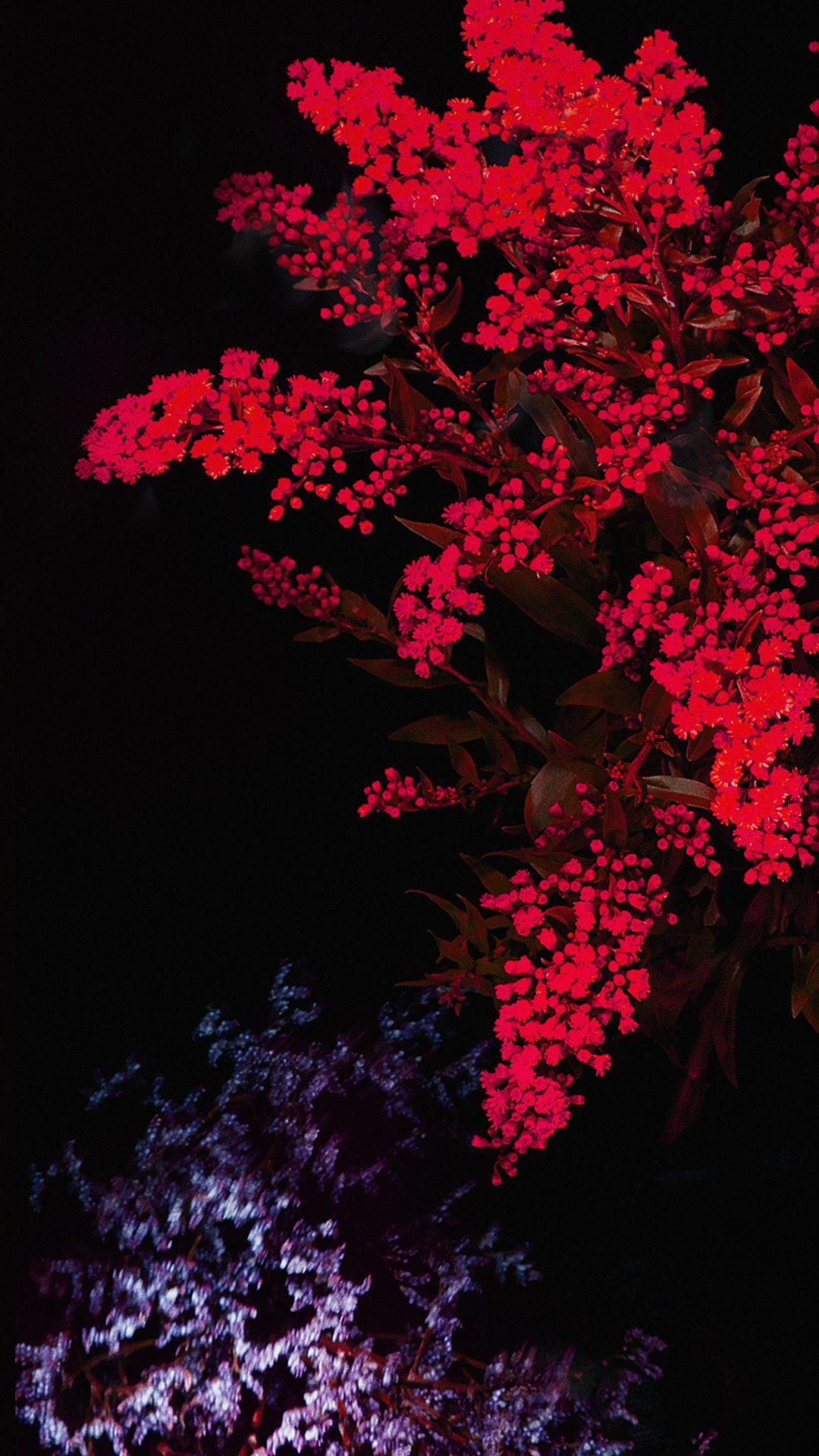 Apple Red Flower Dark Ios9 Iphone6s