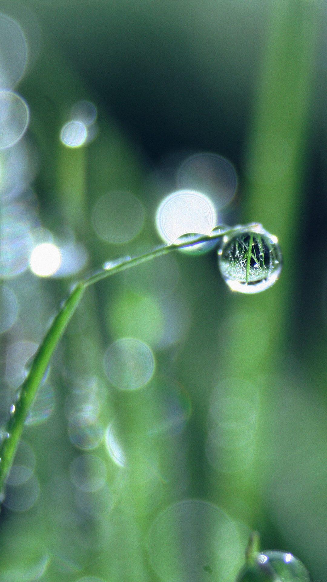 Bokeh Leaf Raindrop Nature Pure