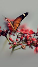 Nature Butterfly Flower Red