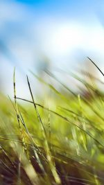 Nature Green Grass Bokeh Summer