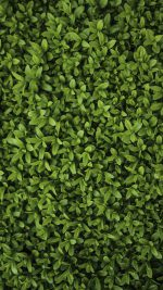 Nature Green Leaf Grass Garden Flower Pattern