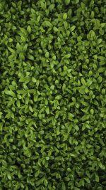 Nature Green Leaf Grass Garden Flower Pattern