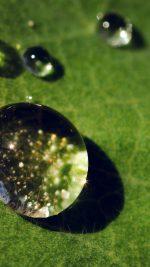 Nature Green Leaf Rain Dro