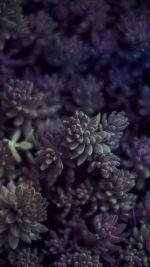 Nature Leaf Green Flower Purple