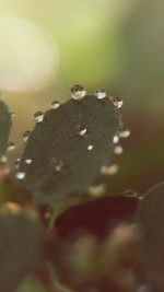 Nature Morning Dew Leaf Flower Rain