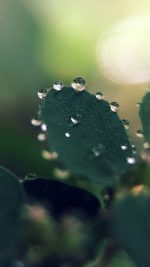 Nature Morning Dew Leaf Flower Rain Green