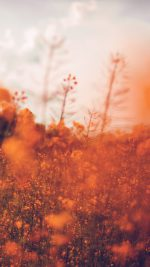 Nature Orange Flower Bokeh Spring Happy