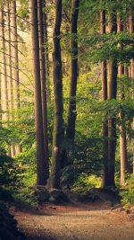 Nature Wood Forest Sunshine Mountain