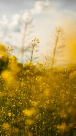 Nature Yellow Flower Bokeh Spring Happy