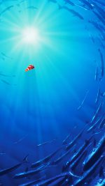 Nemo Disney Film Anime Sea Illustration Art Blue