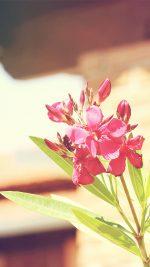 12 I Flower Nature