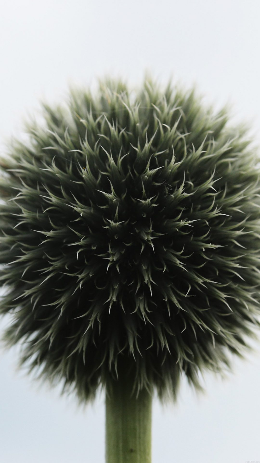 Ball Flower Circle Nature