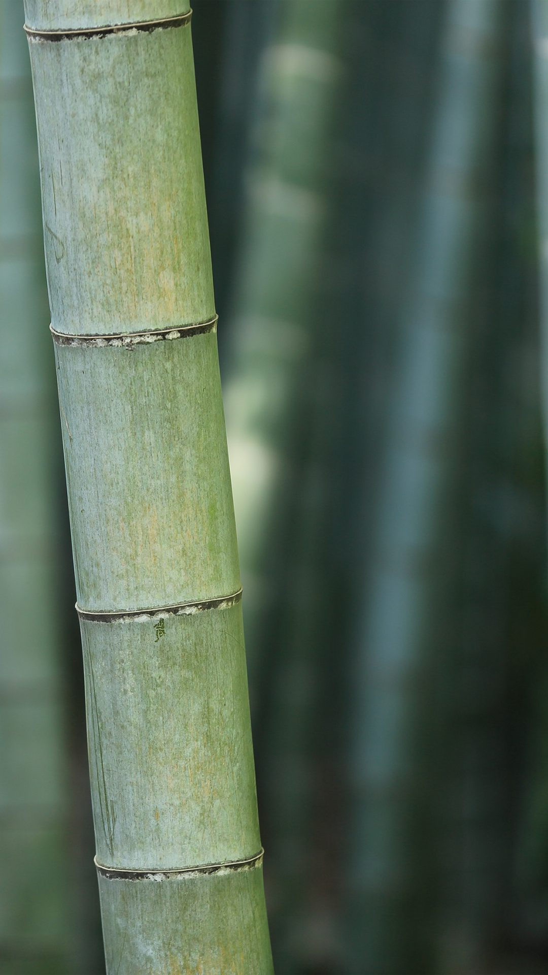 Bamboo Nature Tree Green