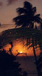 Beach Sunset Sea Tree Nature Holiday