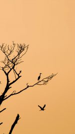 Bird Sunset Tree Nature Minimal