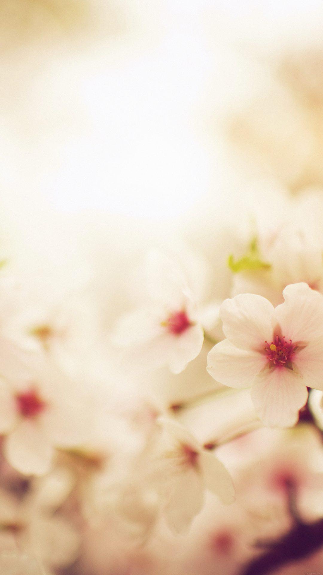 Blossom Cherry Spring Red Sakura Nature Flower